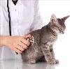 Ветеринарные клиники в Опарино